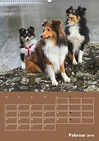 SHELTIES Herzensbrecher auf 4 Pfoten (Wandkalender 2019 DIN A2 hoch) - Produktdetailbild 2