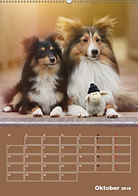 SHELTIES Herzensbrecher auf 4 Pfoten (Wandkalender 2019 DIN A2 hoch) - Produktdetailbild 10