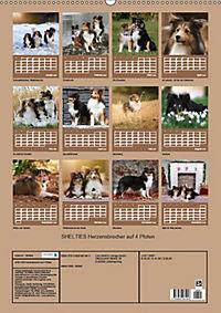 SHELTIES Herzensbrecher auf 4 Pfoten (Wandkalender 2019 DIN A2 hoch) - Produktdetailbild 13