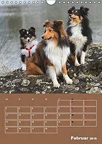 SHELTIES Herzensbrecher auf 4 Pfoten (Wandkalender 2019 DIN A4 hoch) - Produktdetailbild 2