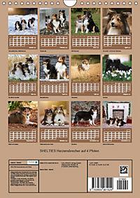 SHELTIES Herzensbrecher auf 4 Pfoten (Wandkalender 2019 DIN A4 hoch) - Produktdetailbild 13