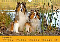 Shetland Sheepdogs (Wall Calendar 2019 DIN A4 Landscape) - Produktdetailbild 9
