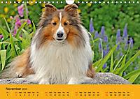 Shetland Sheepdogs (Wall Calendar 2019 DIN A4 Landscape) - Produktdetailbild 11