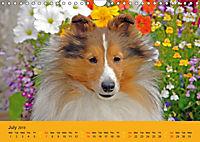 Shetland Sheepdogs (Wall Calendar 2019 DIN A4 Landscape) - Produktdetailbild 7