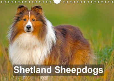 Shetland Sheepdogs (Wall Calendar 2019 DIN A4 Landscape), ROLF KOPFLE