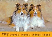 Shetland Sheepdogs (Wall Calendar 2019 DIN A4 Landscape) - Produktdetailbild 1