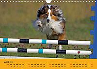 Shetland Sheepdogs (Wall Calendar 2019 DIN A4 Landscape) - Produktdetailbild 6