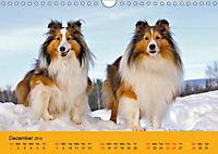 Shetland Sheepdogs (Wall Calendar 2019 DIN A4 Landscape) - Produktdetailbild 12