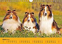 Shetland Sheepdogs (Wall Calendar 2019 DIN A4 Landscape) - Produktdetailbild 3
