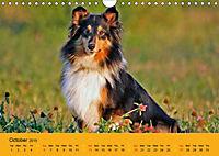Shetland Sheepdogs (Wall Calendar 2019 DIN A4 Landscape) - Produktdetailbild 10