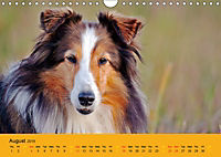 Shetland Sheepdogs (Wall Calendar 2019 DIN A4 Landscape) - Produktdetailbild 8
