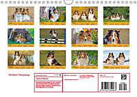 Shetland Sheepdogs (Wall Calendar 2019 DIN A4 Landscape) - Produktdetailbild 13