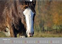 Shire Horse Fohlen (Wandkalender 2019 DIN A3 quer) - Produktdetailbild 1