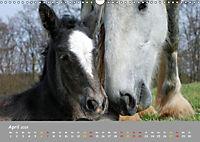 Shire Horse Fohlen (Wandkalender 2019 DIN A3 quer) - Produktdetailbild 4