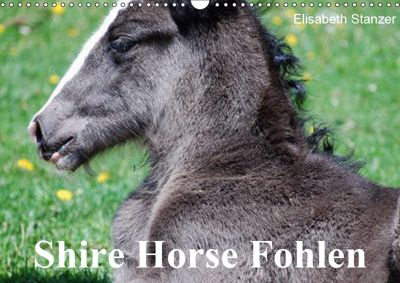 Shire Horse Fohlen (Wandkalender 2019 DIN A3 quer), Elisabeth Stanzer