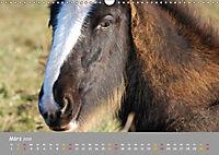 Shire Horse Fohlen (Wandkalender 2019 DIN A3 quer) - Produktdetailbild 3