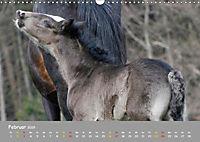 Shire Horse Fohlen (Wandkalender 2019 DIN A3 quer) - Produktdetailbild 2