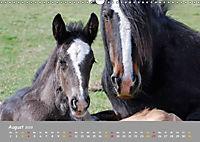 Shire Horse Fohlen (Wandkalender 2019 DIN A3 quer) - Produktdetailbild 8