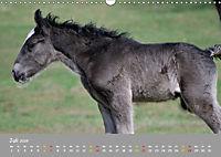 Shire Horse Fohlen (Wandkalender 2019 DIN A3 quer) - Produktdetailbild 7