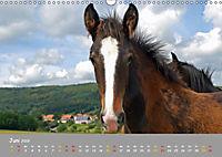 Shire Horse Fohlen (Wandkalender 2019 DIN A3 quer) - Produktdetailbild 6