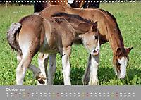 Shire Horse Fohlen (Wandkalender 2019 DIN A3 quer) - Produktdetailbild 10