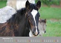 Shire Horse Fohlen (Wandkalender 2019 DIN A3 quer) - Produktdetailbild 9