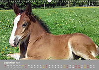 Shire Horse Fohlen (Wandkalender 2019 DIN A3 quer) - Produktdetailbild 12