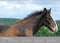 Shire Horse Fohlen (Wandkalender 2019 DIN A3 quer) - Produktdetailbild 11