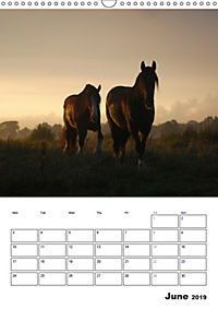 Shire Horses The Gentle Giants (Wall Calendar 2019 DIN A3 Portrait) - Produktdetailbild 6