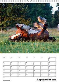 Shire Horses The Gentle Giants (Wall Calendar 2019 DIN A3 Portrait) - Produktdetailbild 9