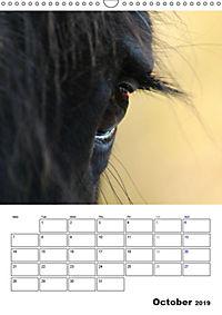 Shire Horses The Gentle Giants (Wall Calendar 2019 DIN A3 Portrait) - Produktdetailbild 10