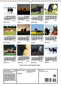 Shire Horses The Gentle Giants (Wall Calendar 2019 DIN A3 Portrait) - Produktdetailbild 13