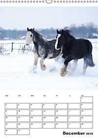 Shire Horses The Gentle Giants (Wall Calendar 2019 DIN A3 Portrait) - Produktdetailbild 12