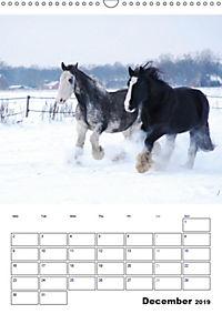 Shire Horses The Gentle Giants (Wall Calendar 2019 DIN A3 Portrait) - Produktdetailbild 12