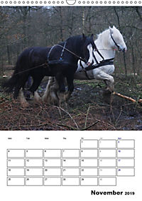 Shire Horses The Gentle Giants (Wall Calendar 2019 DIN A3 Portrait) - Produktdetailbild 11
