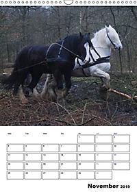 Shire Horses The Gentle Giants (Wall Calendar 2019 DIN A3 Portrait) - Produktdetailbild 11