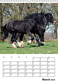 Shire Horses The Gentle Giants (Wall Calendar 2019 DIN A3 Portrait) - Produktdetailbild 3