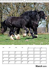 Shire Horses The Gentle Giants (Wall Calendar 2019 DIN A3 Portrait) - Produktdetailbild 3