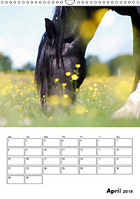 Shire Horses The Gentle Giants (Wall Calendar 2019 DIN A3 Portrait) - Produktdetailbild 4