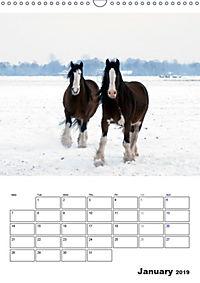 Shire Horses The Gentle Giants (Wall Calendar 2019 DIN A3 Portrait) - Produktdetailbild 1