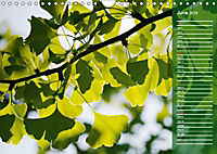 Shrubs and Trees in Spring and Autumn (Wall Calendar 2019 DIN A4 Landscape) - Produktdetailbild 6