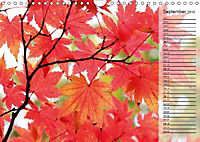 Shrubs and Trees in Spring and Autumn (Wall Calendar 2019 DIN A4 Landscape) - Produktdetailbild 9