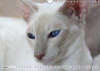 Siamkatzen - Kleiner Frechdachs mit Familie (Wandkalender 2019 DIN A4 quer) - Produktdetailbild 7