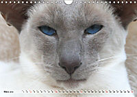 Siamkatzen - Kleiner Frechdachs mit Familie (Wandkalender 2019 DIN A4 quer) - Produktdetailbild 3
