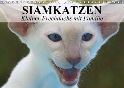Siamkatzen - Kleiner Frechdachs mit Familie (Wandkalender 2019 DIN A4 quer), Elisabeth Stanzer