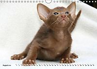 Siamkatzen - Kleiner Frechdachs mit Familie (Wandkalender 2019 DIN A4 quer) - Produktdetailbild 8