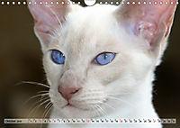 Siamkatzen - Kleiner Frechdachs mit Familie (Wandkalender 2019 DIN A4 quer) - Produktdetailbild 10