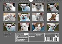Siamkatzen - Kleiner Frechdachs mit Familie (Wandkalender 2019 DIN A4 quer) - Produktdetailbild 13