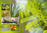 Siena, beliebte und unbekannte Ecken (Wandkalender 2019 DIN A3 quer) - Produktdetailbild 5