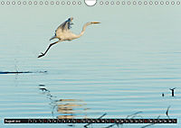 Silberreiher - elegante Jäger (Wandkalender 2019 DIN A4 quer) - Produktdetailbild 8